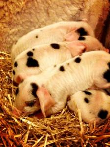 Lochbyre's new additions!